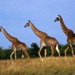 Фотопечать - Африка