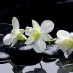 Фотопечать цветы